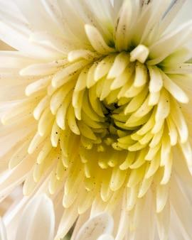 근접 노란색 꽃 매크로 자연