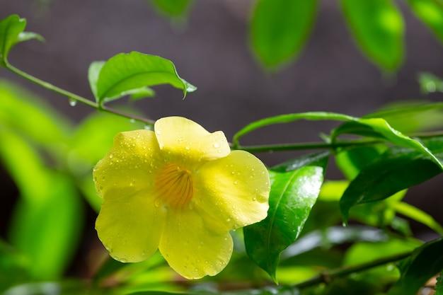 Крупным планом желтый цветок с маленькими каплями дождя
