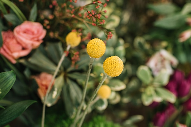 Крупным планом желтые цветы