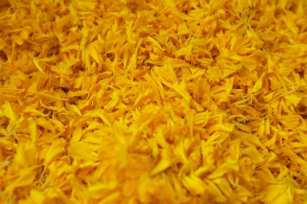 Close up of yellow marigolds