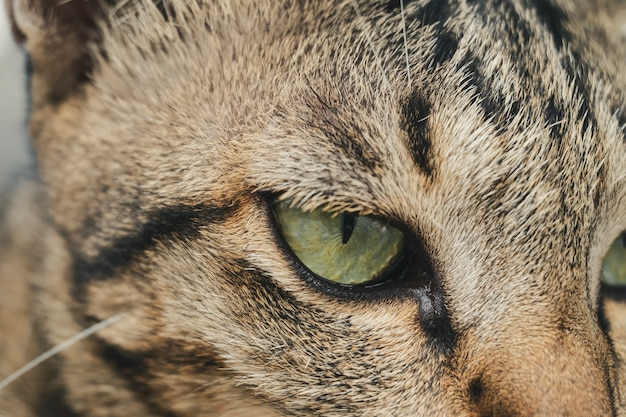 Close up young brown marbled male cat in relaxing time.
