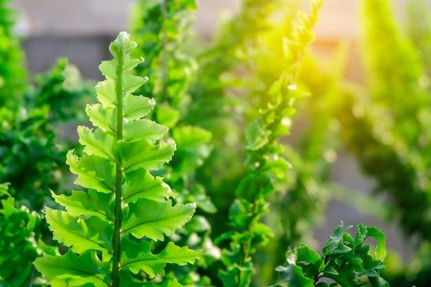 정원에서 어린 고 사리 잎을 닫습니다. 자연 컨셉입니다.