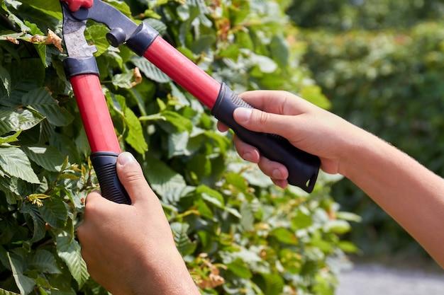 せん断ツールで茂みをトリミングするクローズアップの若い手。庭の葉の手入れ。