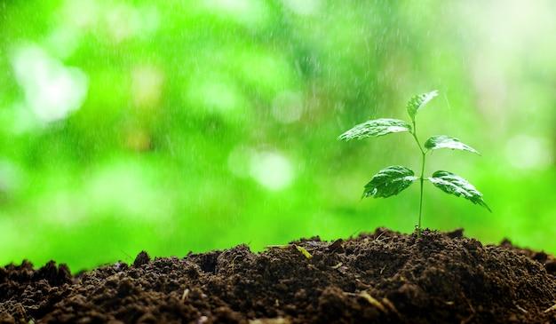Крупным планом молодые растения, растущие с каплей дождевой воды над зеленым и утренним солнечным светом