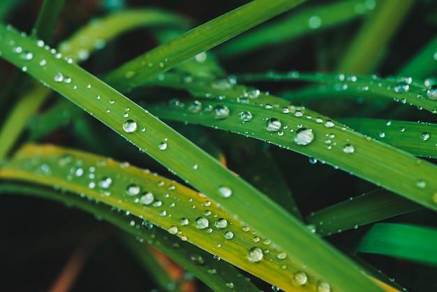 Красивая яркая сияющая зеленая трава с росой падает close-up с космосом экземпляра. чистая, приятная, приятная зелень с каплями дождя на солнце в макро. предпосылка от зеленых текстурированных заводов в погоде дождя.