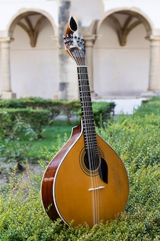 Close view of a traditional portuguese guitar on top of an arranged garden.