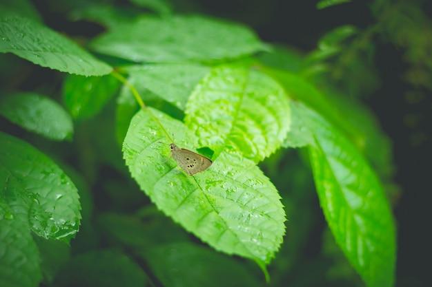 Закрытый кормление бабочки на зеленом листе (выборочный фокус)