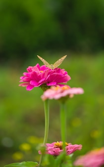 폐쇄 꽃에 나비-꽃 표면을 흐리게합니다.