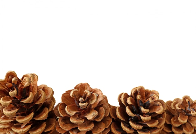 Closed up natural dry pine cones isolated on white background with free space for text and