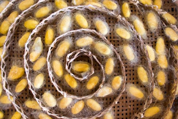 織り巣のカイコのグループ黄色繭のクローズアップ
