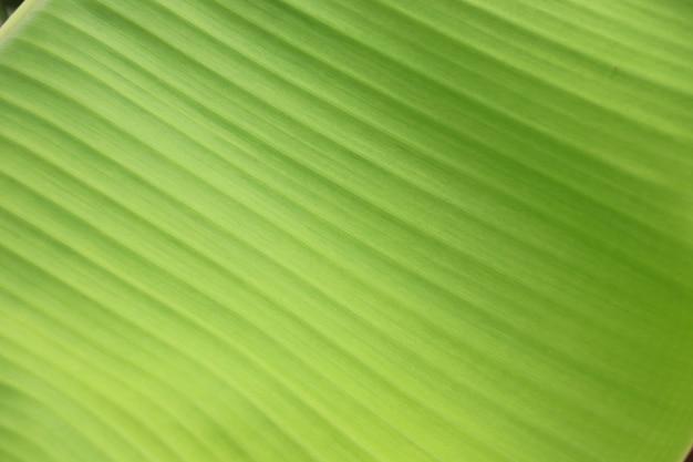 질감 밝은 녹색 바나나 잎의 폐쇄