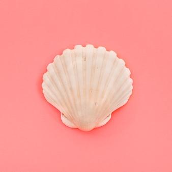 サンゴの背景に閉じた白いホタテ貝殻