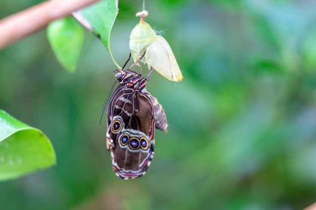 Closed wing butterfly near cocoons