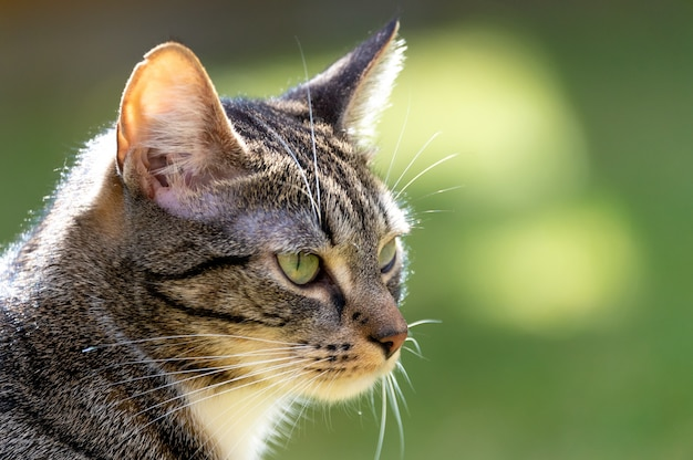 Closeup of an adorable striped cat outdoors under the sunlight
