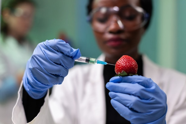 Closeup african american scientist injecting strawberry with chemical pesticides using medical syringe during farming experiment. biochemist working in hospital laboratory testing organic fruits