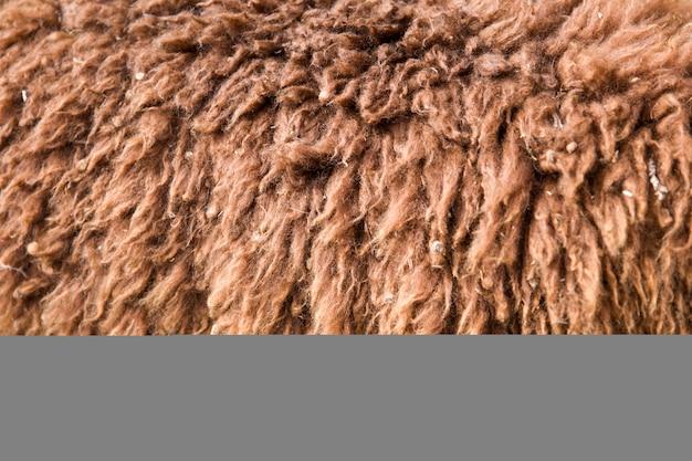 Closeup of alpaca wool