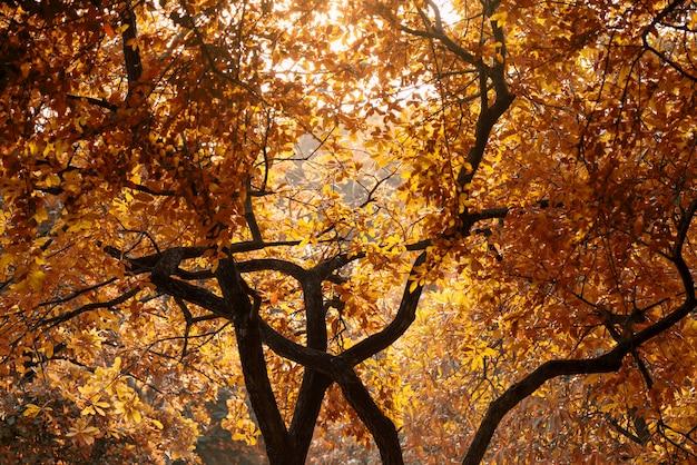 拡大夕暮れの秋の紅葉の木
