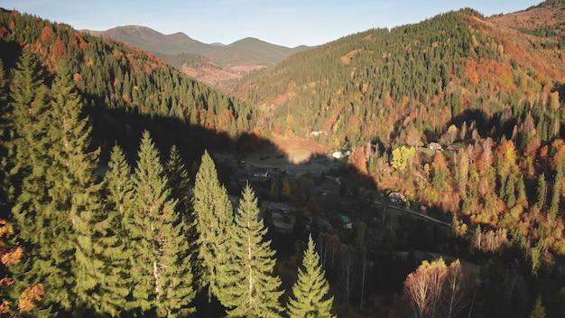 クローズアップ秋の山の森空中誰も自然田園風景モミ松とトウヒの木
