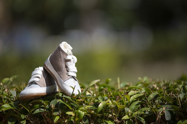 Closeup of baby sneakers on the lawn under sunlight with a blurry background