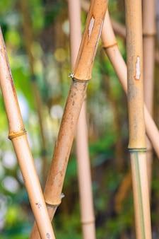 Primo piano di bambù sotto la luce del sole con uno sfondo sfocato