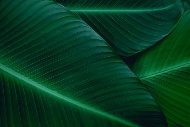 クローズアップバナナの葉の自然の背景