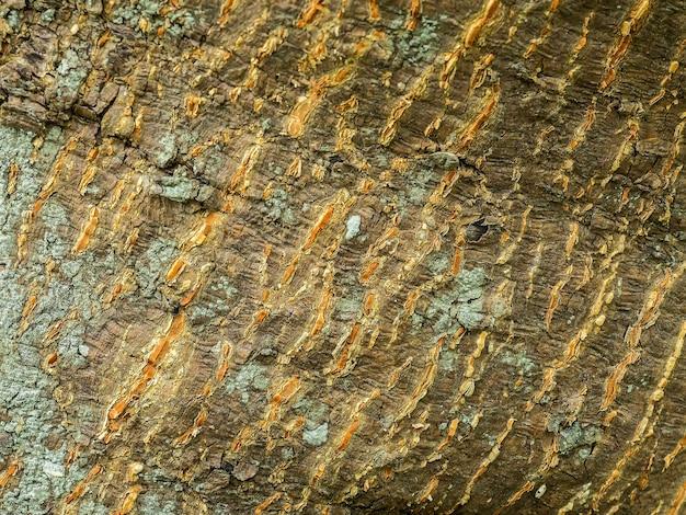 Closeup bark of terminalia