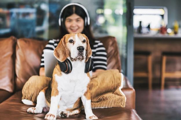 Собака бигль крупным планом в наушниках и сидит с азиатской деловой женщиной с использованием технологий