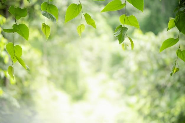 녹색 잎을 통해 근접 촬영 소원보기
