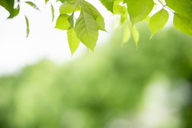 庭の緑の背景をぼかした写真の緑の葉の美しい魅力的な自然ビューをクローズアップ