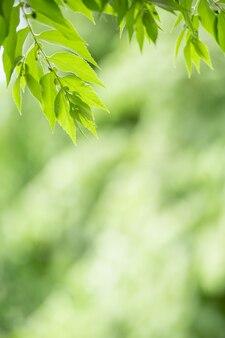 Крупным планом красивый привлекательный вид природы зеленых листьев на фоне затуманенное зелени в саду