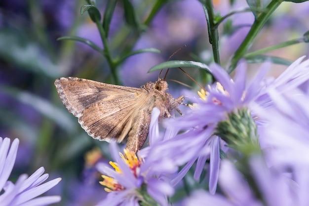 Бабочка крупного плана красивая в летнем саду. мотылек на цветке