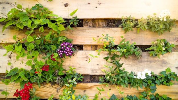 Closeup beautiful image of flowers grwoing through wooden board on decorative wall. creative flower bed in urban garden