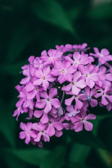 Primo piano di bello fiore lilla