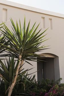 Closeup of beautiful lush green tropical palm leaves.