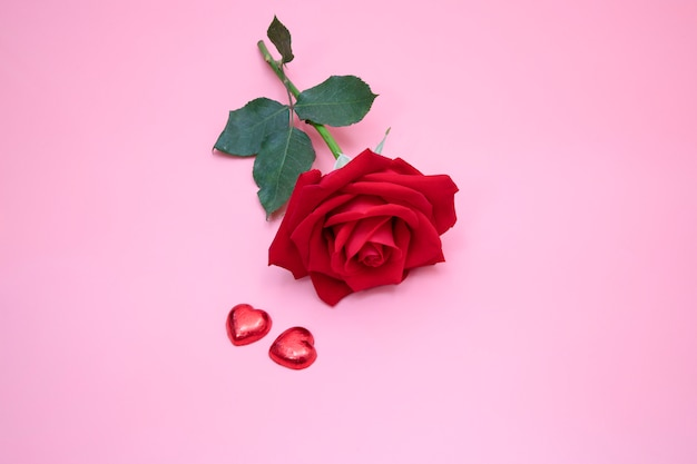 Closeup of a beautiful red rose on pink background with two red candy hearts.  valentine's,  anniversary, wedding concept.