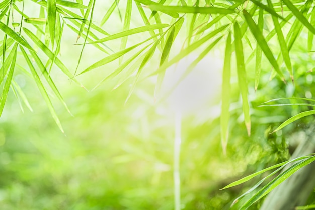 Closeup beautiful view of nature green bamboo leaf on greenery blurred background with sunlight and copy space.