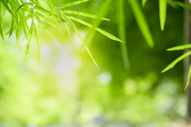 Closeup beautiful view of nature green bamboo leaf on greenery blurred background with sunlight and copyspace.