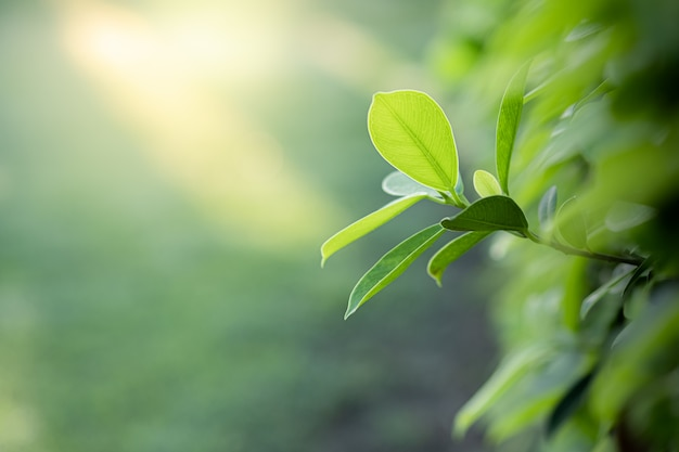 Closeup beautiful view of nature green leaves on blurred greenery tree background with sunlight in public garden park.