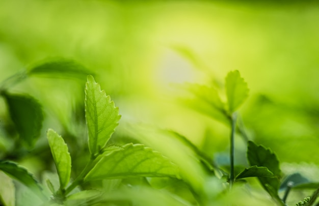 Closeup beautiful view of nature green leaves on blurred greenery tree background