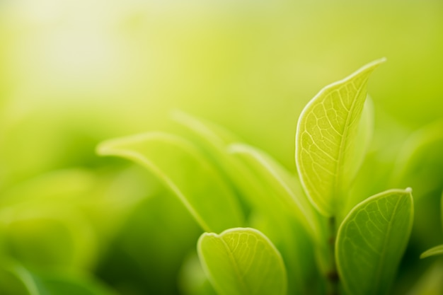 Closeup beautiful view of nature green leaves on blurred greenery tree with sunlight