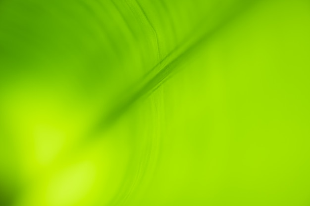 Closeup beautiful view of nature green leaves on blurred greenery tree