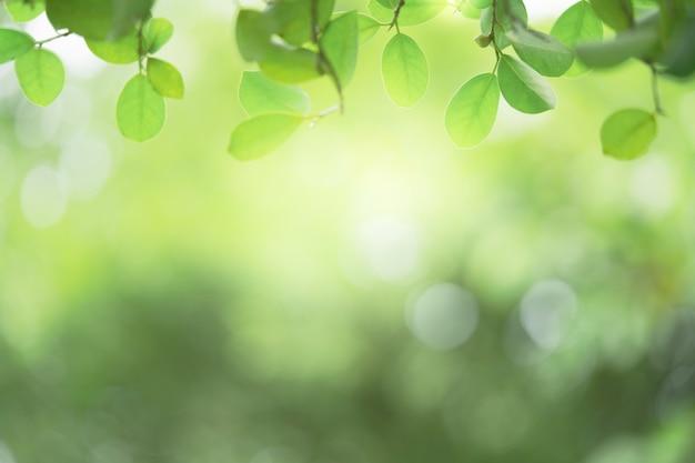 녹지에 자연 녹색 잎의 근접 촬영 아름 다운보기 햇빛 및 복사 공간 배경 흐리게. 자연 생태 여름 배경과 신선한 벽지 개념에 사용됩니다.
