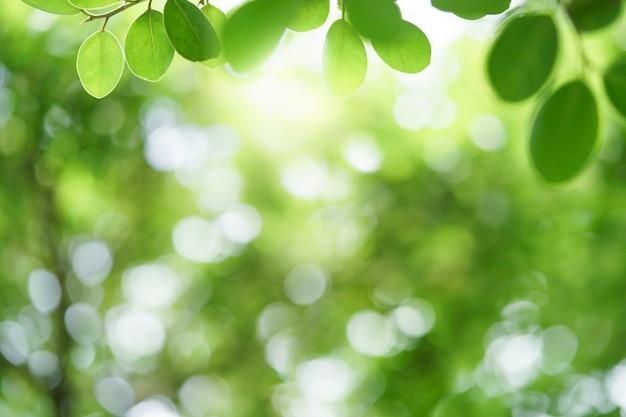 햇빛과 복사 공간이 있는 흐릿한 배경에 있는 자연 녹색 잎의 아름다운 전망을 닫습니다. 자연 생태 여름 배경과 신선한 벽지 개념에 사용됩니다.