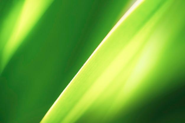 自然の緑の葉のクローズアップ美しい景色