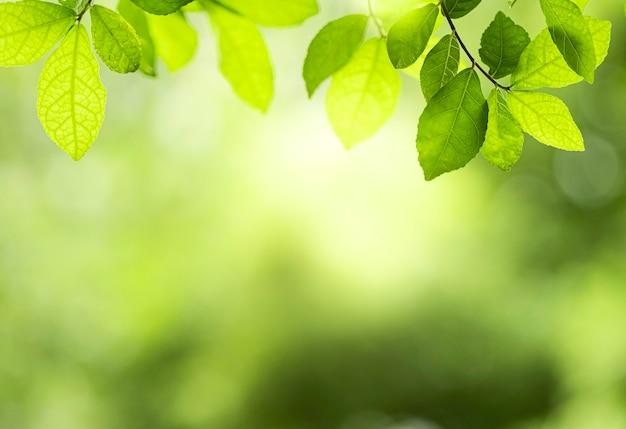 Крупным планом красивый вид на природу зеленые листья на фоне затуманенное дерево зелени с солнечным светом в парке общественного сада. это ландшафтная экология и копия пространства для обоев и фона.