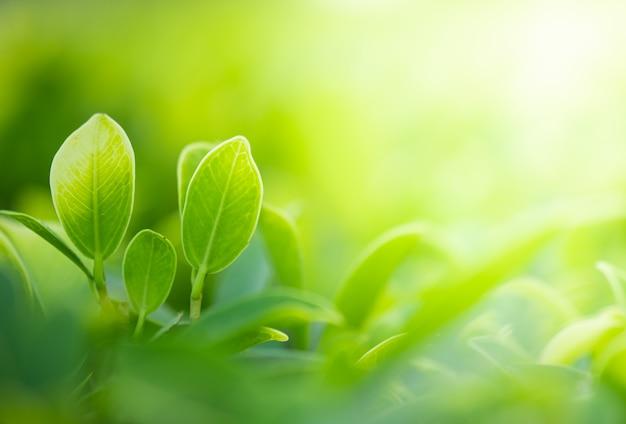 自然緑のクローズアップの美しい景色は、公共の庭公園で日光とぼやけた緑の木の背景に残します。