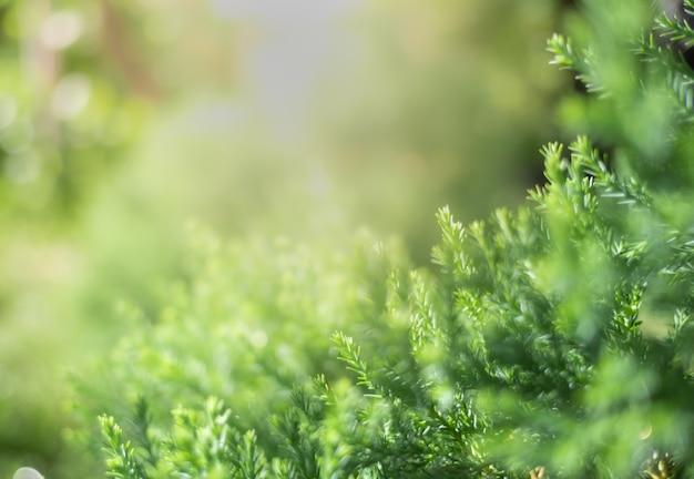 자연 녹색의 근접 촬영 아름 다운보기 공공 정원 공원에서 햇빛 흐리게 녹지 트리 배경에 나뭇잎.