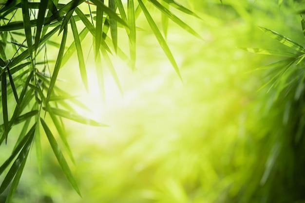 日光とぼやけた緑の木の背景に自然の緑のクローズアップの美しい景色を残します
