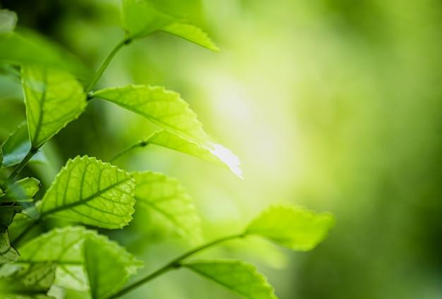 자연 녹지의 근접 촬영 아름다운보기 흐리게 녹지 트리 배경에 나뭇잎
