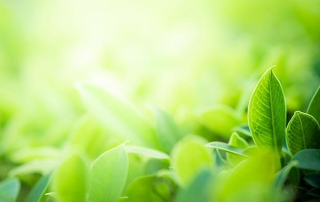 ぼやけた緑の木の自然の緑の葉の美しい景色をクローズアップ